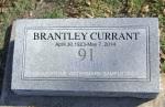 currant stone