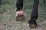 Hoof tenders