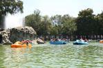 paddleboat race