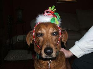 unhappy-christmas-dog