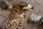 An honest-to-god falcon, according to Bird Search Engine Dot Com.