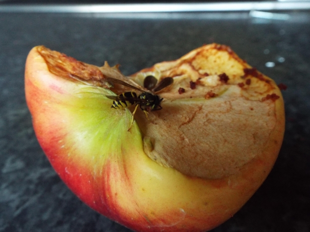Fruit wasp
